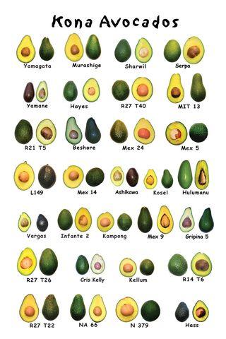 Avocado-poster