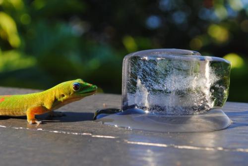 Gecko ice
