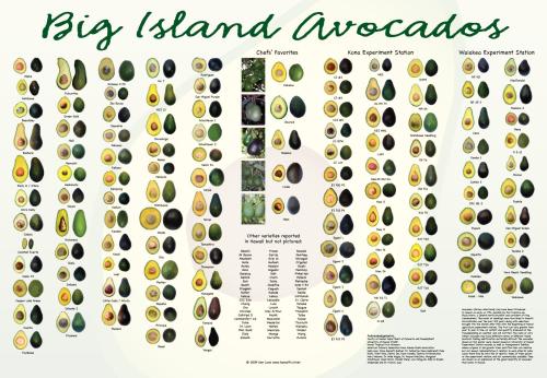 AvocadoPoster